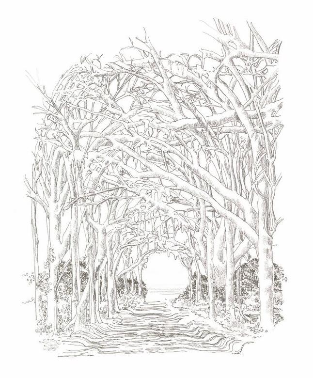 Canopy_Road_html_71510b87