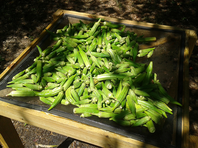 Washed and drying before chopping up for dehydrating