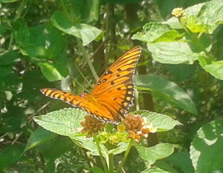 Orange sun crop