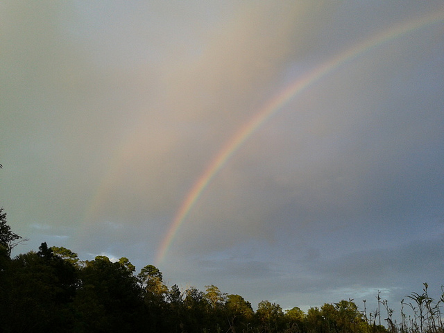 Landscape of two rainbows, pines, and okra