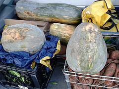 Zucca, okra, sweet potatoes
