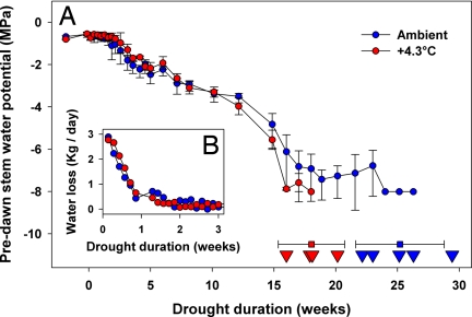 Fig. 1. Water relations progression and death dates.